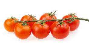 Tomatoes cherry red Stock Photography