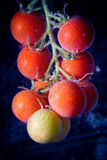 Tomatoes. Cherry tomatoes in the water bubbles Royalty Free Stock Images