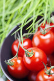 Tomatoes and chives Stock Photos