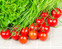 Tomatoes, chives and salad Stock Photography