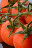 Tomatoes. Close-up of wet red ripe tomatoes stock images