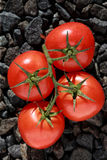 Tomatoes cluster Royalty Free Stock Photo
