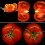 Tomatoes collage Stock Photography