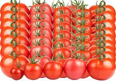 Tomatoes constructed in a row isolated on white background Royalty Free Stock Image