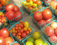 Tomatoes in Containers Royalty Free Stock Photography