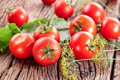Tomatoes, cooked with herbs. Royalty Free Stock Images