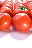 Tomatoes with copy space. Display of a group of market fresh tomatoes with odd one out Royalty Free Stock Photos