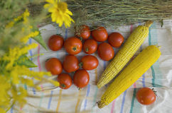 Tomatoes and corn Royalty Free Stock Image