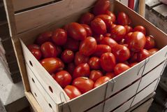 Tomatoes in crate Royalty Free Stock Images