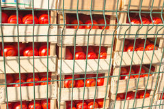 Tomatoes in crates Royalty Free Stock Images
