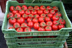 Tomatoes in crates Stock Photos