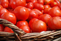 Tomatoes crop in a basket Stock Images