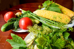 Tomatoes, cucumber, dill, garlic, pickles and corn. Still life of various vegetables Royalty Free Stock Photos