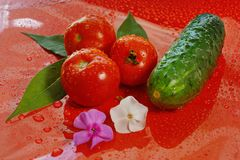 Tomatoes and cucumber on a red background water droplets on the. Tomatoes and cucumber on a red background with water droplets on the surface. three tomatoes and royalty free stock photo