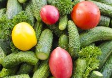 Tomatoes cucumbers Stock Photos