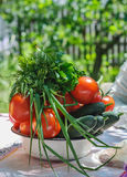 Tomatoes, cucumbers, onions, parsley and dill in a white plate on the table.  Stock Image
