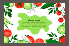 Tomatoes and cucumbers. Red tomatoes and ripe cucumbers. Brochure. Food design template. Great for design of healthy lifestyle or diet.Vector illustration Stock Photo