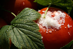 Tomatoes with currant leaves and salt macro. Detailed Stock Photography