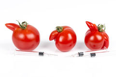 Tomatoes with deformation and defects on white background, with syringe. Tomatoes with deformation and defects, with syringe. Chemical treatment for rapid Stock Images