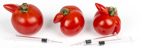 Tomatoes with deformation and defects on white background, with syringe. Tomatoes with deformation and defects, with syringe. Chemical treatment for rapid Royalty Free Stock Photo