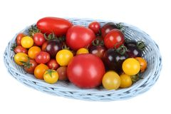 Tomatoes. Stock Image