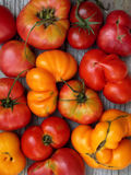 Tomatoes of different varieties and colors. Fresh tomatoes of different varieties and colors royalty free stock photo