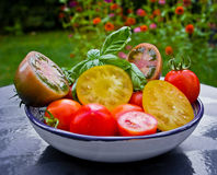 Tomatoes. Different varieties of fresh tomatoes turnover Royalty Free Stock Photography