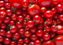 Tomatoes of different varieties. Red tomatoes Tomatoes background. Fresh tomatoes Healthy food concept. Stock Images