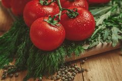 Tomatoes and dill Stock Images