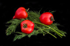 Tomatoes with dill isolated on black Stock Photos