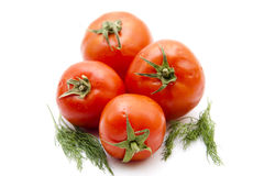 Tomatoes with dill Royalty Free Stock Photos