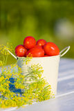 Tomatoes and dill Stock Photo