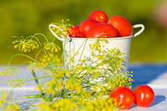 Tomatoes and dill Stock Photos