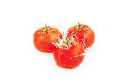 Tomatoes with drops of water isolated on white Royalty Free Stock Photography