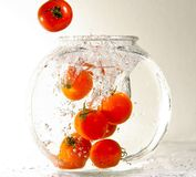 Tomatoes falling into water Royalty Free Stock Photos