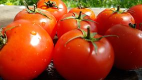 Tomatoes falls drip falls water healthy plant summer natural vegetable slow-motion turns. Tomatoes drip water   slow-motion summer    vegetable natural healthy stock footage