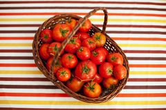 Tomatoes from the farm Royalty Free Stock Photography