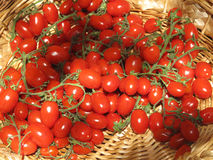 Tomatoes at farmer's market. Tomatoes in basket at farmer's market in Germany Stock Image