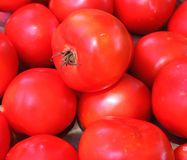 Tomatoes at Farmer`s Market stock image
