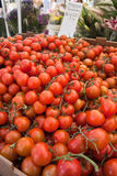 Tomatoes at farmers market Stock Images