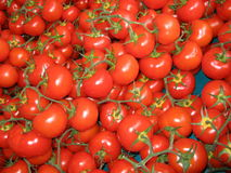 Tomatoes at farmers market Royalty Free Stock Images