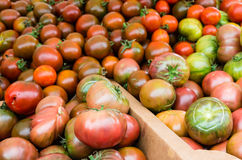 Tomatoes at the farmers market Royalty Free Stock Image