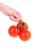 Tomatoes in female hand isolated on white Stock Photography
