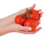 Tomatoes in female hand isolated on white Royalty Free Stock Photos