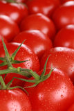 Tomatoes forming a background and with copyspace Stock Image