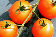 Tomatoes four. Four tomatoes on a stone dish Stock Image