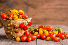 Tomatoes Royalty Free Stock Photography