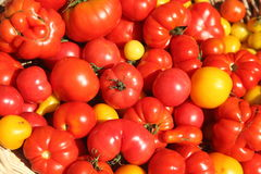 Tomatoes. Fresh variety of organic tomatoes Royalty Free Stock Photography
