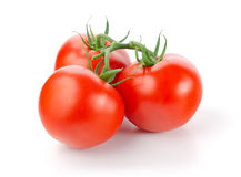 Tomatoes. Fresh Tomatoes on White Background Royalty Free Stock Photography
