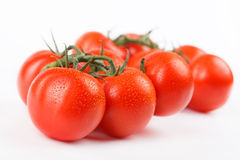Tomatoes. Freshly picked ripe tomatoes on a branch Royalty Free Stock Images